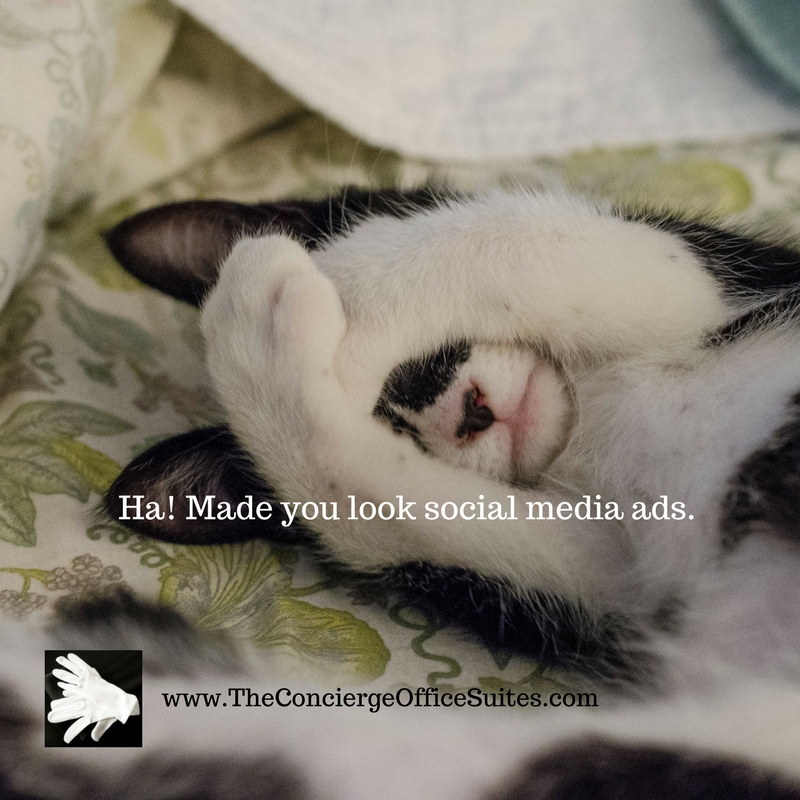 Ha! Made you look social media ads.